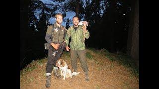 Hunting Red/Fallow Deer NZ 2017