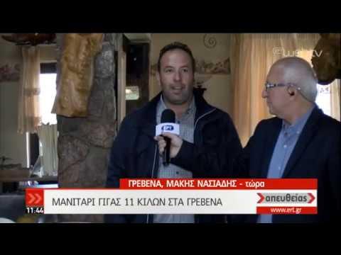Μανιτάρι-γίγας στα Γρεβενά | 08/10/2019 | ΕΡΤ