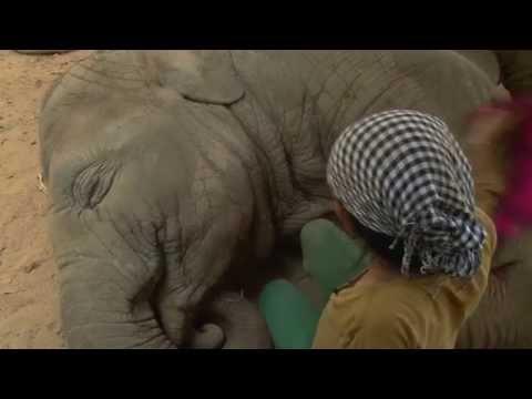 una donna canta soave ad un elefante: guardate cosa succede