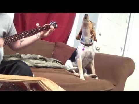 Banjo Dog