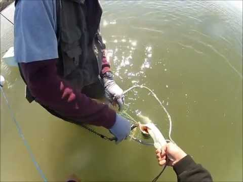 Speckled trout & Redfish on Artificials