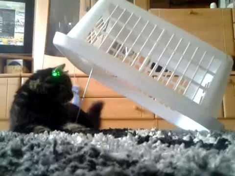 Katzenfalle :D