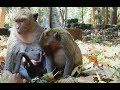 Baby Monkey Vs Bad Mom Kidnapper MV 0177