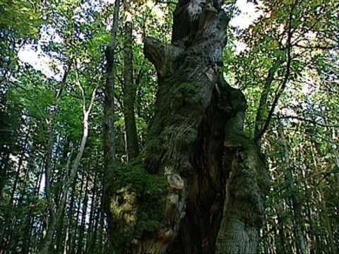 Presentazione del Parco Nazionale delle Foreste Casentinesi, Monte Falterona e Campigna                               www.parcoforestecasentinesi.it