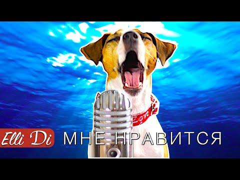 Егор Крид - Мне нравится | СОБАКА ДЖИНА ПОЁТ | Elli Di Собаки (видео)