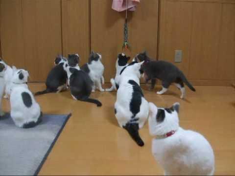 「[ネコ]14匹の猫達による大運動会状態のお家。」のイメージ