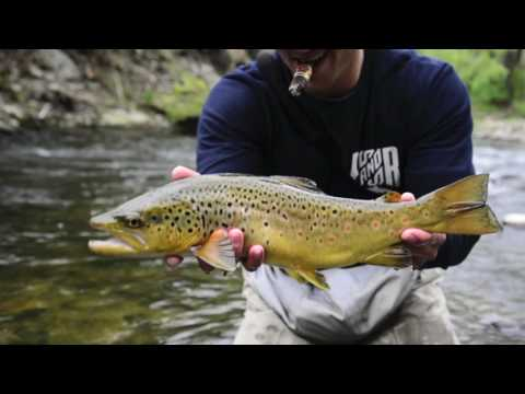 Nymphing Big Wild Brown Trout