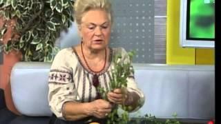 """Наталя Земна у Львові"" Передача №9"