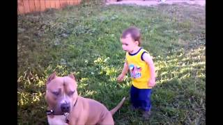 A pet dog got bullied by a little kid its so cute,