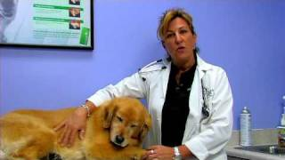 Dog Breeding&Pregnancy : Caring For Newborn Puppies