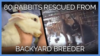 More Than 80 Rabbits Rescued From Backyard Breeder | PETA Animal Rescues