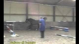 Galiano PKZ (2006, BWP, Contact vd Heffinck - Alme Crack Z)