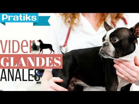 Méthode pour vidanger les glandes anales de votre chien ?