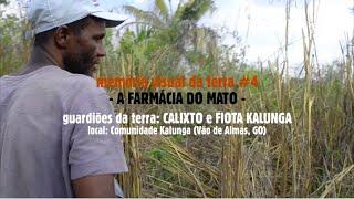 A FARMÁCIA DO MATO (multiplica!) memória visual da terra #4