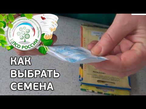 ВЫБОР СЕМЯН. Как выбрать семена помидор, перцев, огурца, зелени и др.