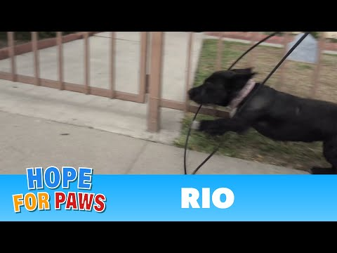 Abandoned dog gets hit by a car and then tries to escape from rescuers!