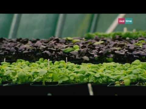 le erbe aromatiche, saperle conoscere e usare