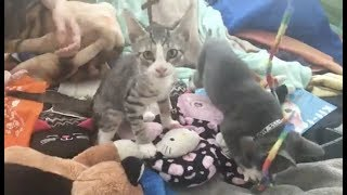 LIVE: Adoptable Kitten Slumber Party | The Dodo + Meow for Now by The Dodo