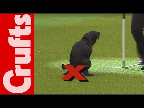 狗狗表演比賽到一半,竟然就解放了!?