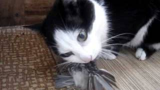кот ловит воробьев