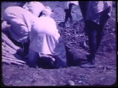 Abobaku Tied And Buried Alive at Ooni of Ife Burial