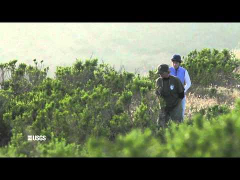 Channel Islands: Harnessing Fog on Santa Rosa Island