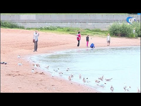 Специалисты Роспотребнадзора не рекомендуют новгородцам купаться в Волхове