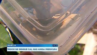 Índice de infestação da dengue cai em Marília, mas ainda preocupa autoridades de saúde