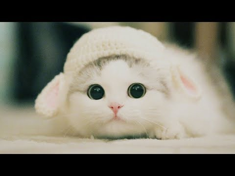 Funny animals - Cute Kittens Will Melt Your Heart - Kittens That Will Make You Fall In Love