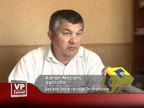 Seceta face ravagii în Prahova