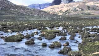 Download Lagu Arctic Tundra Mp3