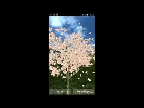 Video of 3D Cherry Blossom LWP(Free)