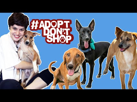 #AdoptDontShop || Everything You Need To Know Before You Adopt A Dog!