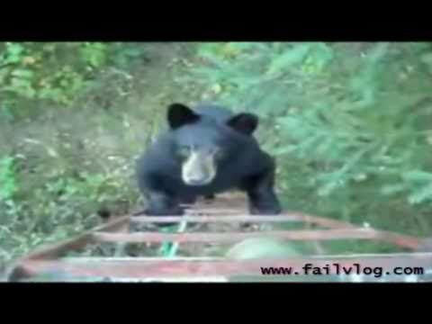 Bear climbs up Hunters ladder