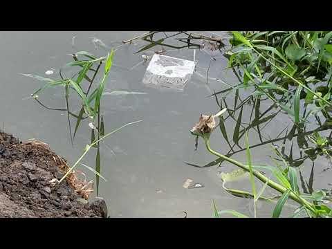 Chổ Câu Tuyệt Đẹp Rất Nhiều Cá ở Sài Gòn l Bờ Kè Đình Thần Bình Quới Tây - Thời lượng: 27:03.