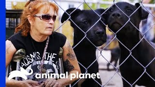 Behind The Scenes With Tia At Pit Stop For Change Rescue Center | Pit Bulls & Parolees by Animal Planet
