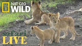 Safari Live - Day 91 | Nat Geo Wild by Nat Geo WILD