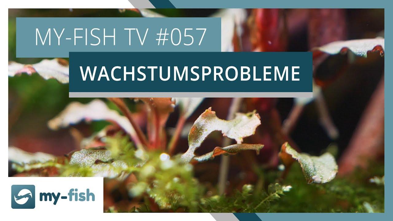 my-fish TV - Deine Nr. 1 Anlaufstelle für alle Themen rund um die Aquaristik 7