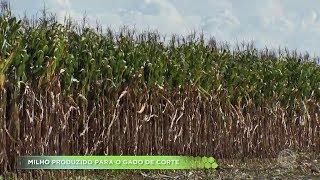 Agro Record na íntegra - 14/04/2019 Bloco 2