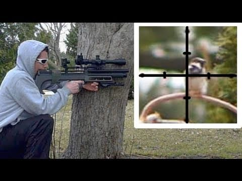 English Sparrow (pest) eradication from bird feeder