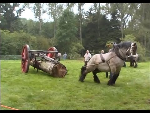 Petra  the strongest Belgian Draft Horse