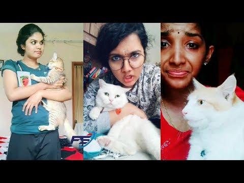 Funny cat videos - ന്റെ പൂച്ച കുഞ്ഞേ..നിന്റെ കഴിവ് അപാരം തന്നെ!! Cat Funny TikTok Collection