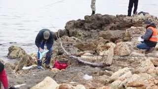Севастопольский сарган 2013. Морская рыбалка, бомбарда (сбирулино)