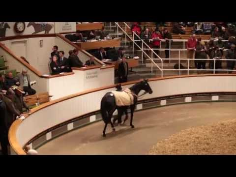 Tattersalls December Breeding Stock Sale 2012 Day 2
