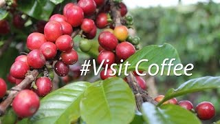 Visiting Coffee Plantation