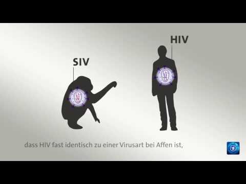 AIDS: Woher stammt HIV?