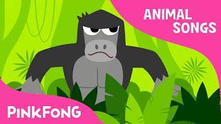 Video Jungle Boogie | Animal Songs | PINKFONG Songs for Children MP3, 3GP, MP4, WEBM, AVI, FLV November 2018