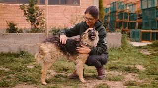 HSI introduce el cuidado veterinario de alta calidad en Bolivia by The Humane Society of the United States