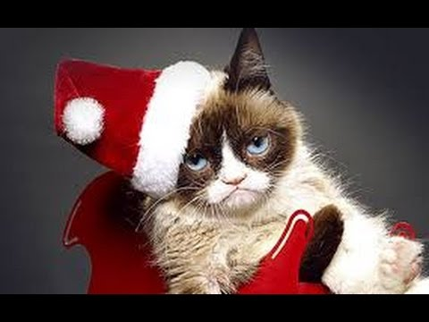 Grumpy Cats Worst Christmas Ever (2014) With Megan Charpentier , Daniel Roebuck, Grumpy Cat Movie