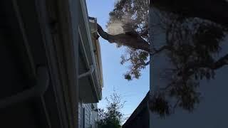 Kiedy drzewo sąsiada znajduje się na Twojej posesji i postanawiasz coś z tym zrobić